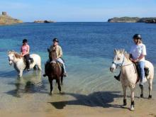 Horses in the sea