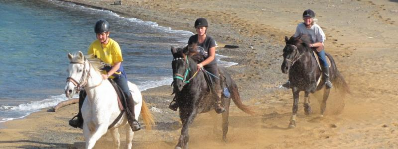 Cantering along the beach